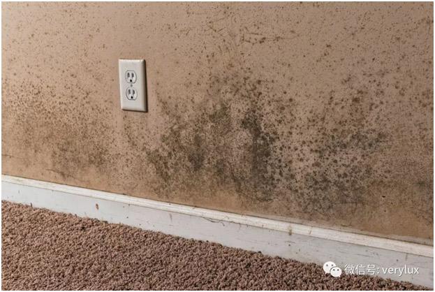 外墙质量问题导致墙面发霉